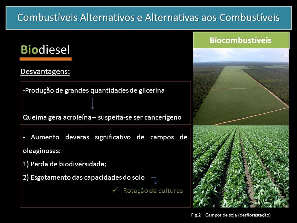 Combustíveis Alternativos e Alternativas aos Combustíveis Biocombustíveis Biodiesel - Aumento deveras significativo de campos de oleaginosas: 1) Perda
