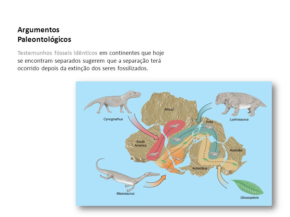 Argumentos Paleontológicos Testemunhos fósseis idênticos em continentes que hoje se encontram separados sugerem que a separação terá ocorrido depois da extinção dos seres fossilizados.