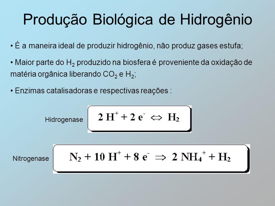 Produção Biológica de Hidrogênio É a maneira ideal de produzir hidrogênio, não produz gases estufa; Maior parte do H 2 produzido na biosfera é proveni