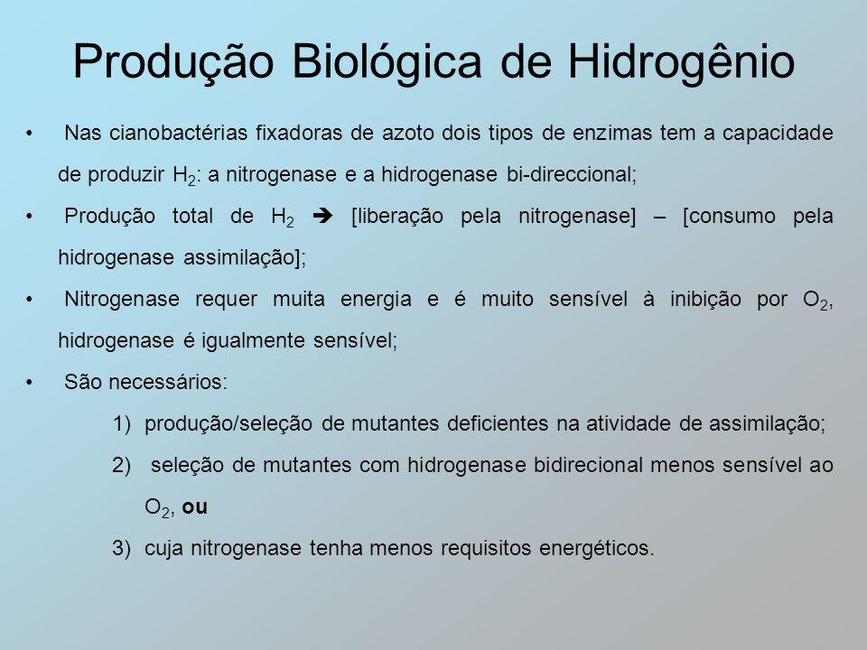 Nas cianobactérias fixadoras de azoto dois tipos de enzimas tem a capacidade de produzir H 2 : a nitrogenase e a hidrogenase bi-direccional; Produção
