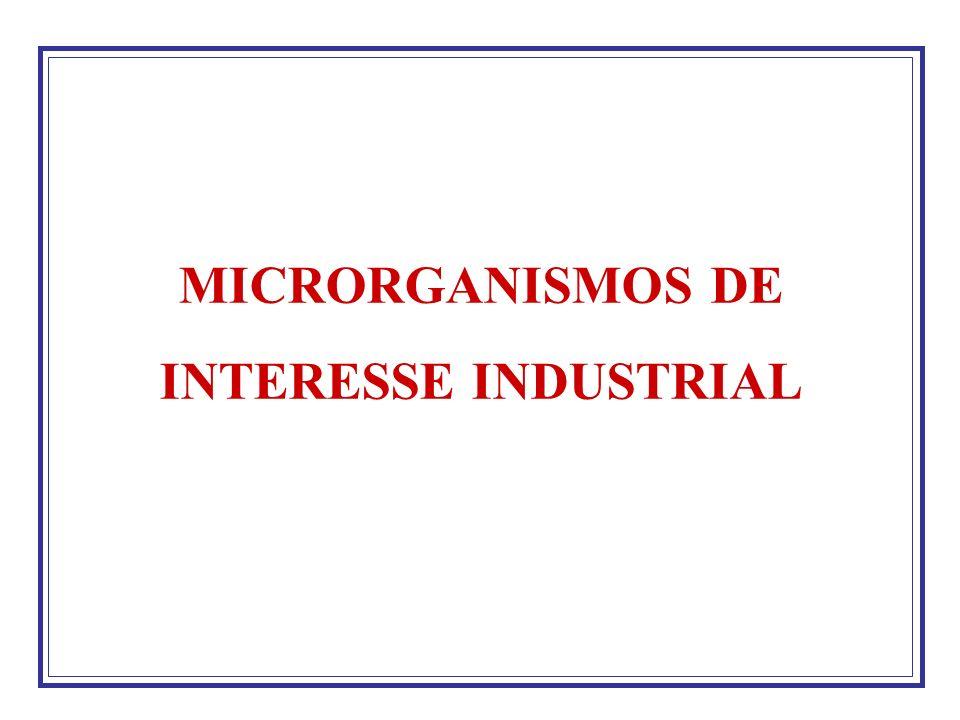 Características Desejáveis de Microrganismos Permitir a rápida liberação do produto para o meio sem inibição pela retenção do produto.
