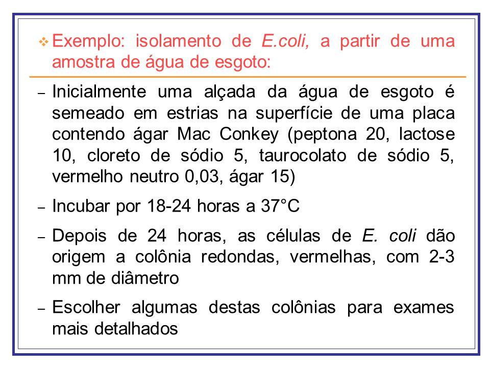 Características Desejáveis de Microrganismos Não ser patogênico manipulação sem riscos ambientais, principalmente no término do processo fermentativo; cultivos de patogênicos exigem cuidados adicionais (câmaras assépticas).