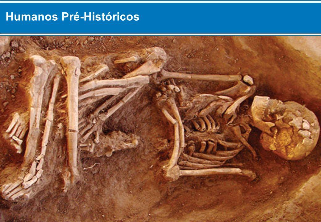 Estudos Paleontológicos Seja qual fora maneira pela qual surgiram os Primeiros Humanos, como seriam nossos Ancestrais.