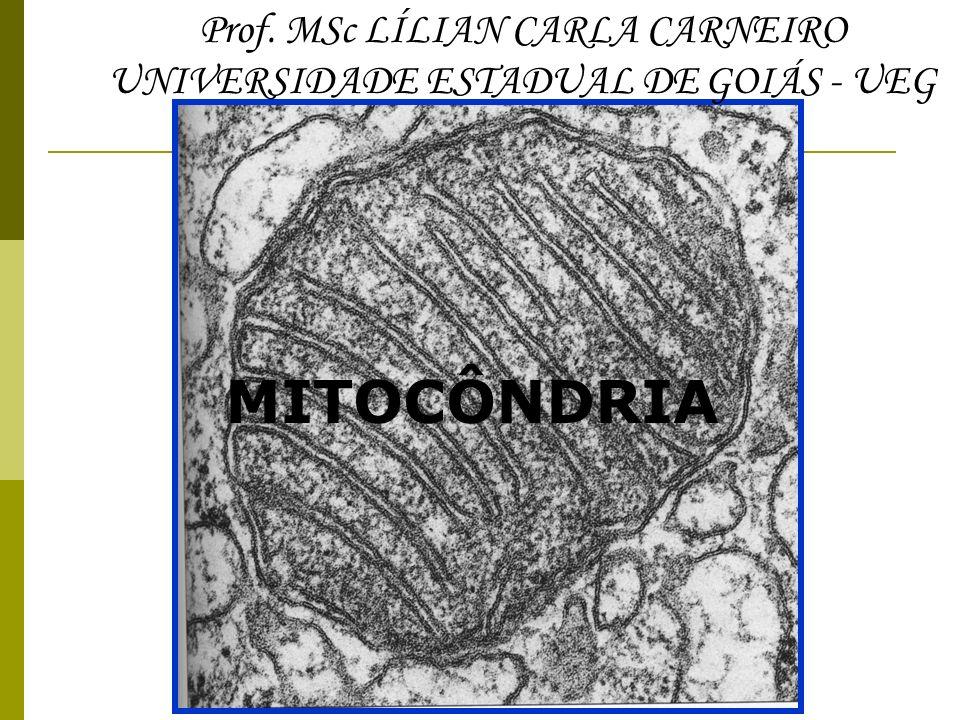 MITOCÔNDRIA Prof. MSc LÍLIAN CARLA CARNEIRO UNIVERSIDADE ESTADUAL DE GOIÁS - UEG