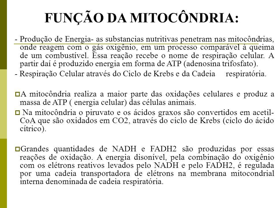 FUNÇÃO DA MITOCÔNDRIA: - Produção de Energia- as substancias nutritivas penetram nas mitocôndrias, onde reagem com o gás oxigênio, em um processo comp