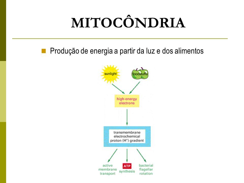 MITOCÔNDRIA Produção de energia a partir da luz e dos alimentos