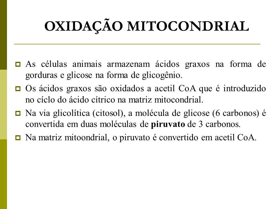 OXIDAÇÃO MITOCONDRIAL As células animais armazenam ácidos graxos na forma de gorduras e glicose na forma de glicogênio. Os ácidos graxos são oxidados