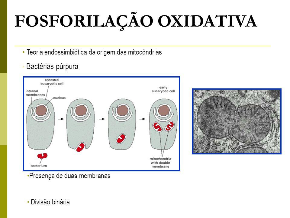 Mecanismo geral da fosforilação oxidativa.