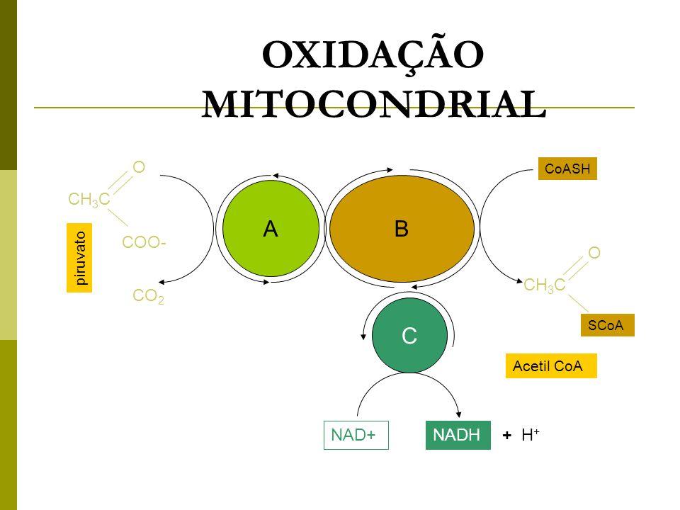 CH 3 C O COO- A B C O NAD+NADH + H + Acetil CoA SCoA CoASH CO 2 piruvato CH 3 C OXIDAÇÃO MITOCONDRIAL