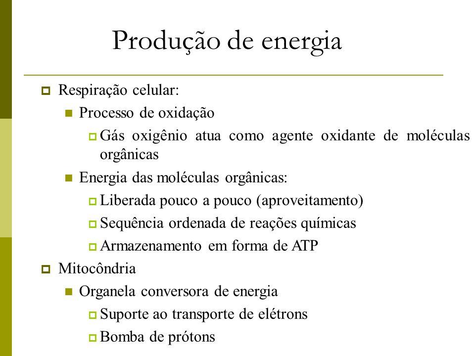 Produção de energia Respiração celular: Processo de oxidação Gás oxigênio atua como agente oxidante de moléculas orgânicas Energia das moléculas orgân