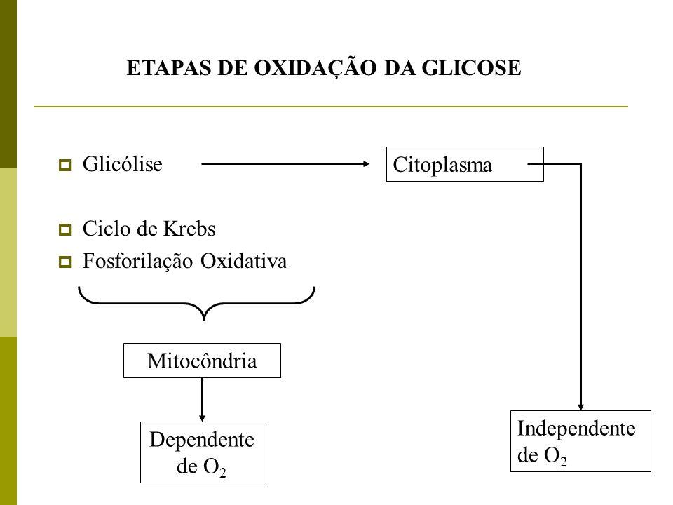 ETAPAS DE OXIDAÇÃO DA GLICOSE Glicólise Ciclo de Krebs Fosforilação Oxidativa Mitocôndria Dependente de O 2 Independente de O 2 Citoplasma