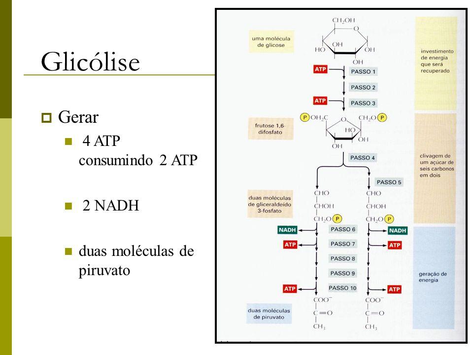 Glicólise Gerar 4 ATP consumindo 2 ATP 2 NADH duas moléculas de piruvato