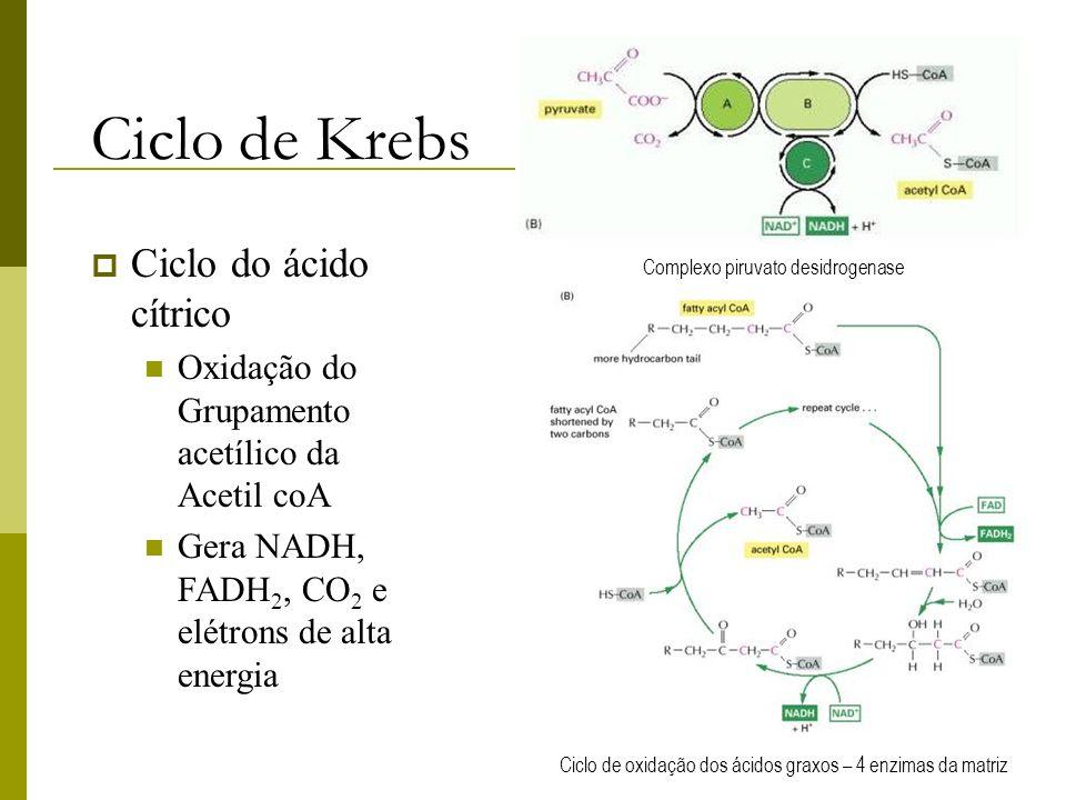 Ciclo de Krebs Ciclo do ácido cítrico Oxidação do Grupamento acetílico da Acetil coA Gera NADH, FADH 2, CO 2 e elétrons de alta energia Ciclo de oxida