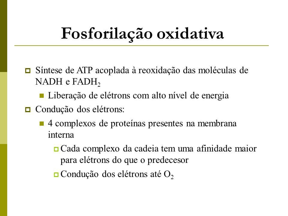 Fosforilação oxidativa Síntese de ATP acoplada à reoxidação das moléculas de NADH e FADH 2 Liberação de elétrons com alto nível de energia Condução do
