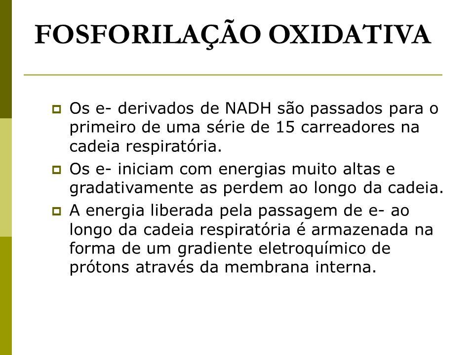 FOSFORILAÇÃO OXIDATIVA Os e- derivados de NADH são passados para o primeiro de uma série de 15 carreadores na cadeia respiratória. Os e- iniciam com e
