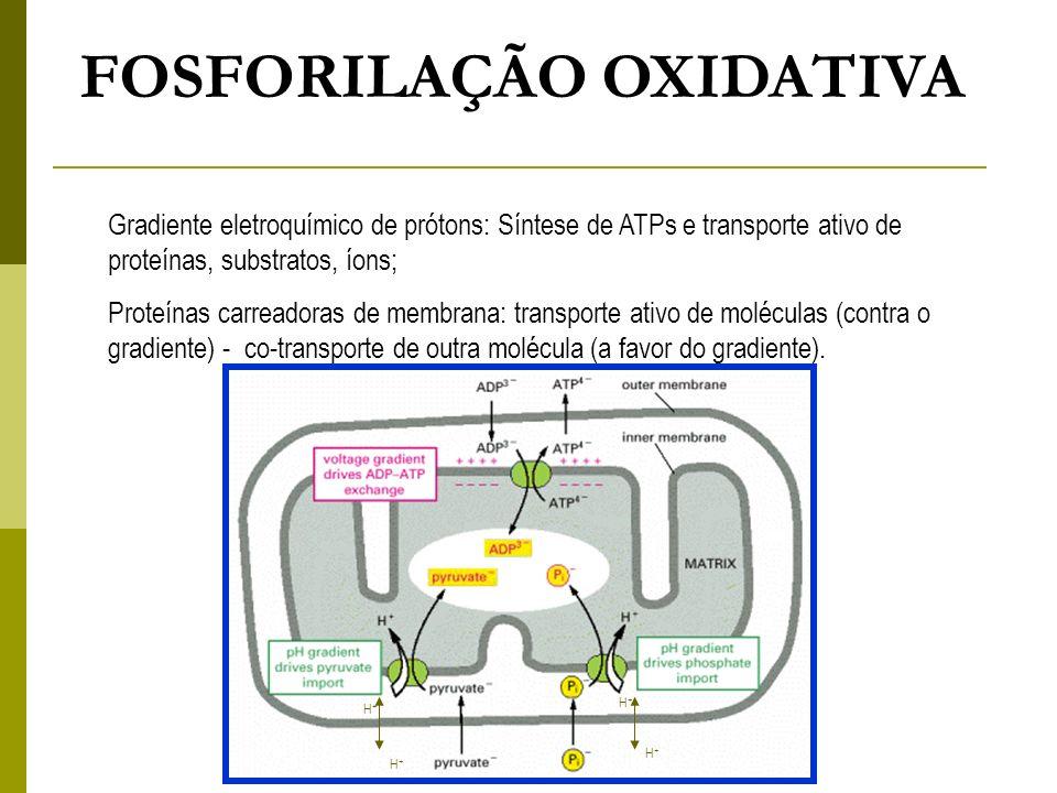 FOSFORILAÇÃO OXIDATIVA Gradiente eletroquímico de prótons: Síntese de ATPs e transporte ativo de proteínas, substratos, íons; Proteínas carreadoras de