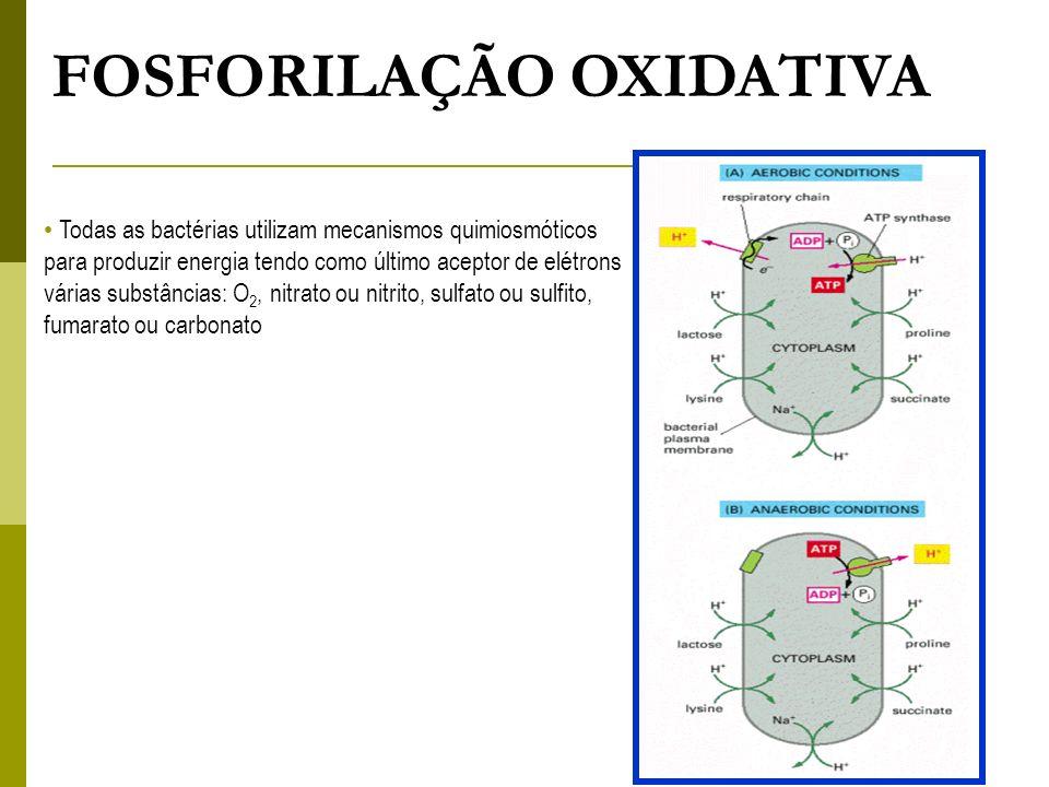 FOSFORILAÇÃO OXIDATIVA Todas as bactérias utilizam mecanismos quimiosmóticos para produzir energia tendo como último aceptor de elétrons várias substâ