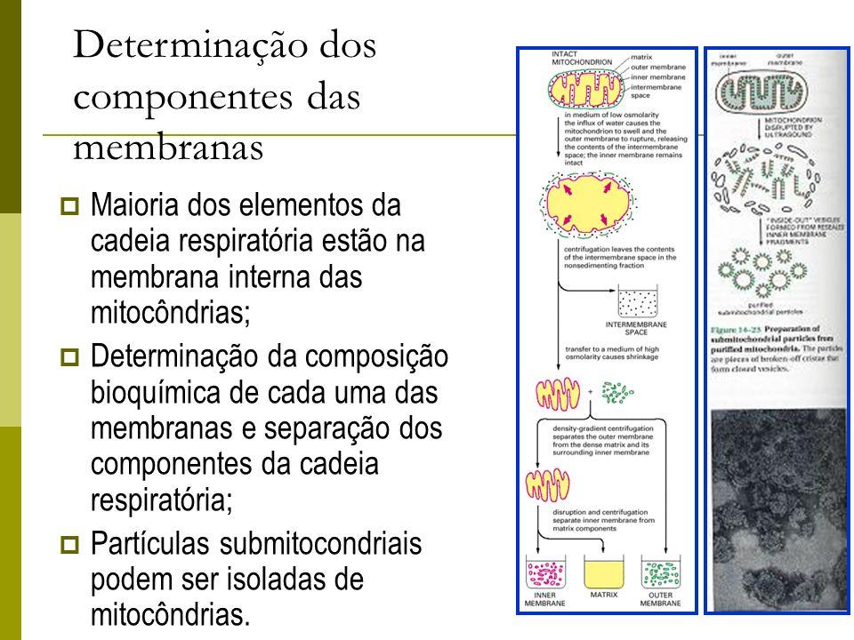 Determinação dos componentes das membranas Maioria dos elementos da cadeia respiratória estão na membrana interna das mitocôndrias; Determinação da co