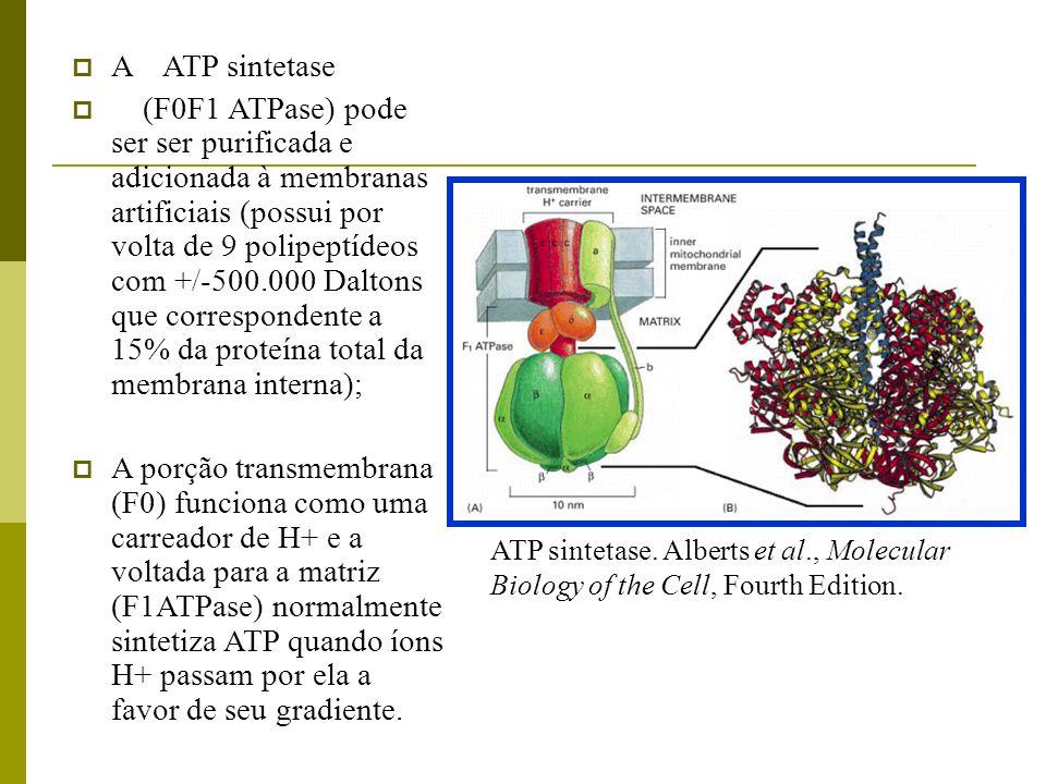 A ATP sintetase (F0F1 ATPase) pode ser ser purificada e adicionada à membranas artificiais (possui por volta de 9 polipeptídeos com +/-500.000 Daltons