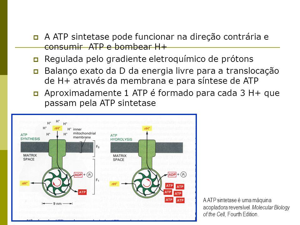 A ATP sintetase pode funcionar na direção contrária e consumir ATP e bombear H+ Regulada pelo gradiente eletroquímico de prótons Balanço exato da D da