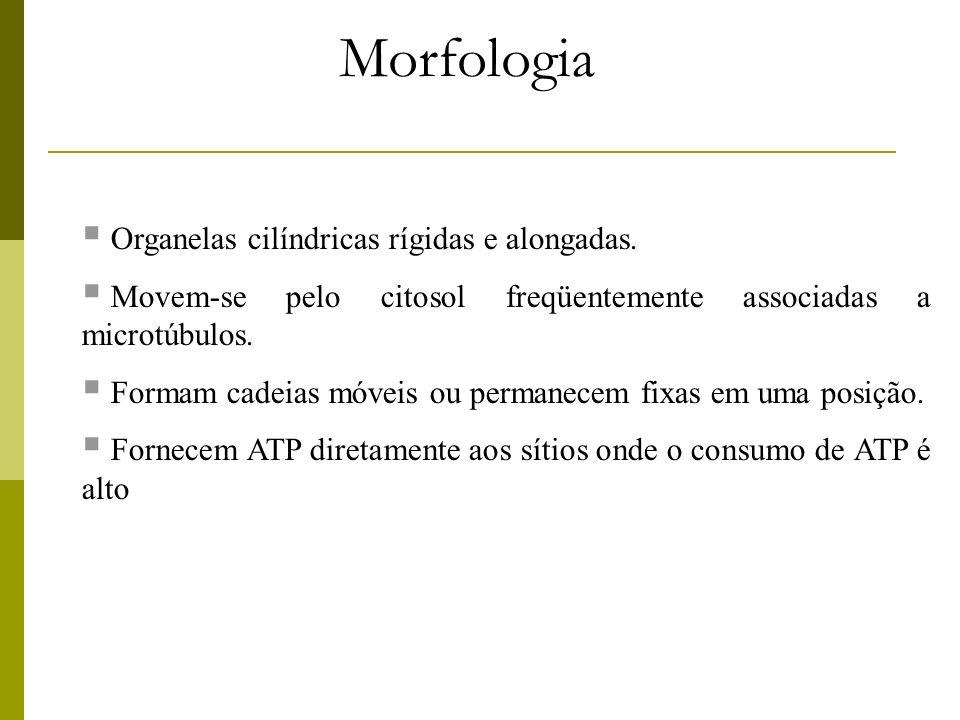 Membrana externa Espaço intermembranas Membrana interna Matriz mitocondrial Organização geral da mitocôndria.