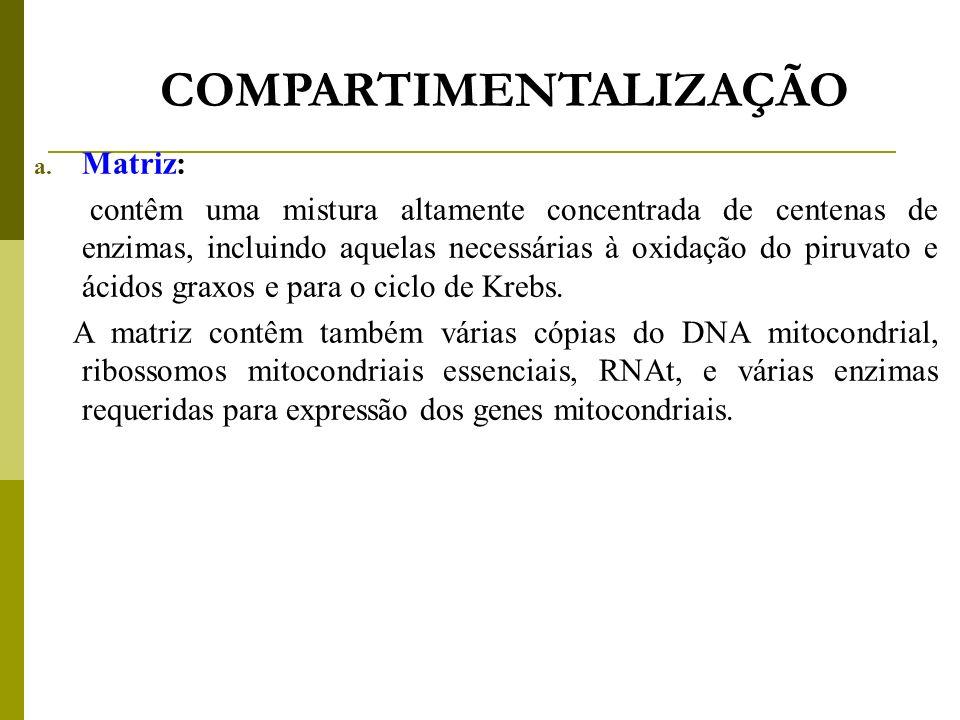 COMPARTIMENTALIZAÇÃO a. Matriz: contêm uma mistura altamente concentrada de centenas de enzimas, incluindo aquelas necessárias à oxidação do piruvato