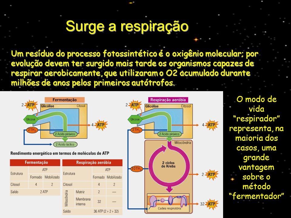 Surge a respiração Um resíduo do processo fotossintético é o oxigênio molecular; por evolução devem ter surgido mais tarde os organismos capazes de re