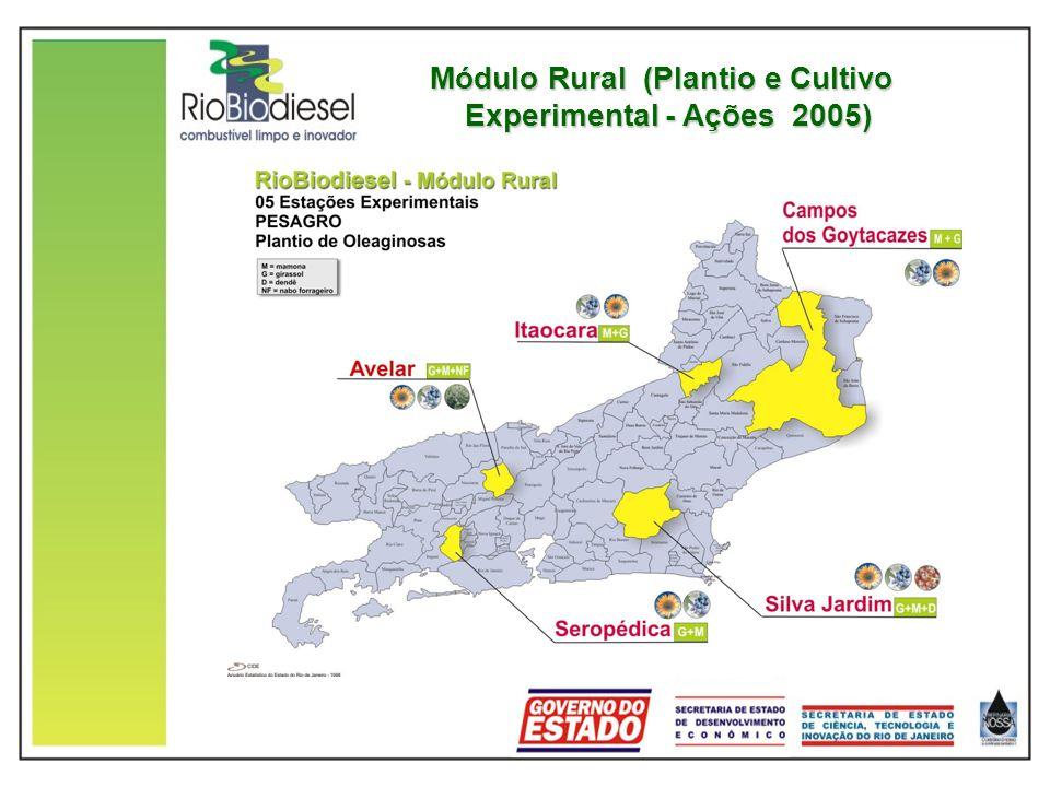 Módulo Rural (Plantio e Cultivo Experimental - Ações 2005) Módulo Rural (Plantio e Cultivo Experimental - Ações 2005)