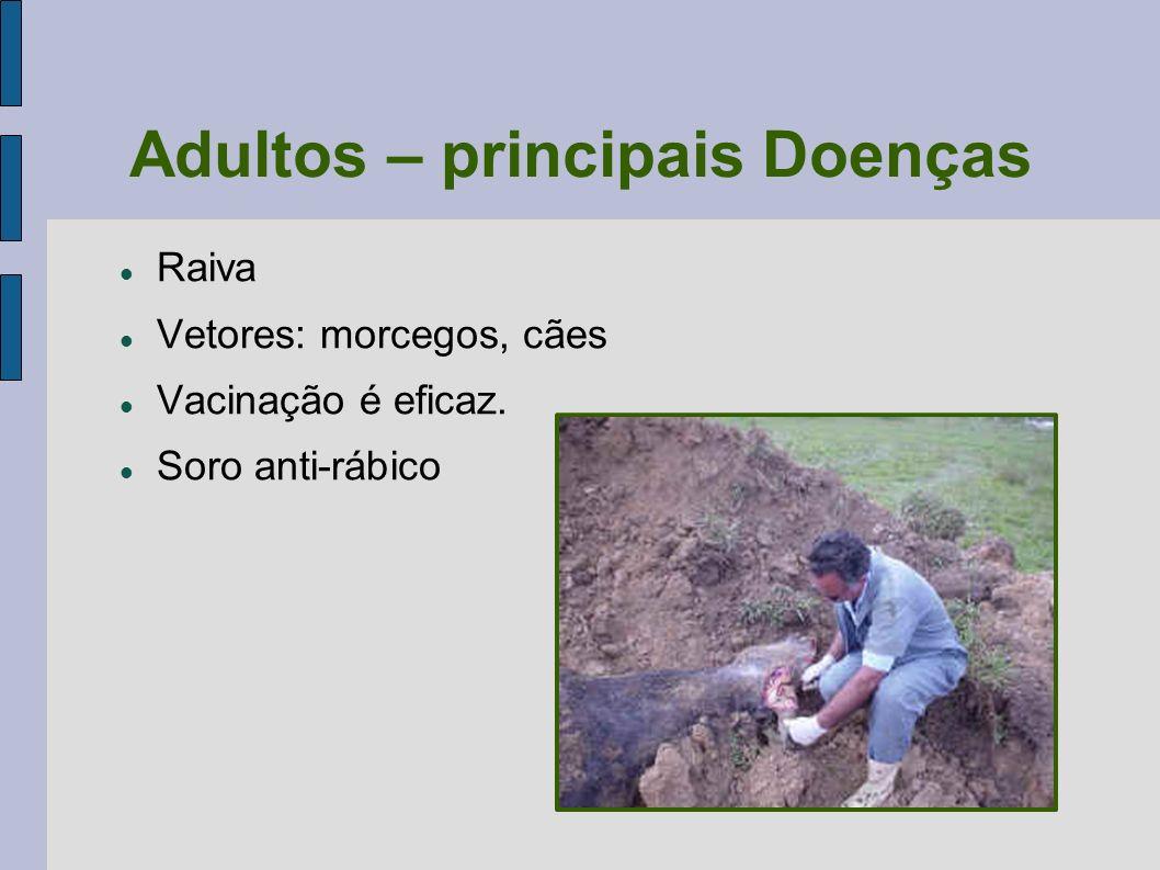 Adultos – principais Doenças Raiva Vetores: morcegos, cães Vacinação é eficaz. Soro anti-rábico