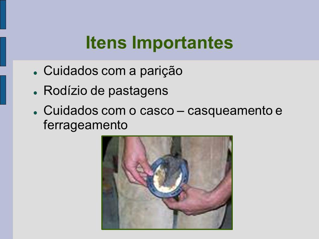 Desinfecção das Instalações Cal a 20% (simples e barato) Sulfato de cobre 3 a 5% Creolina a 1 ou 2% Desinfecção de arreios- solução de ácido fênico a 5% e sabão (6h ou mais) Vassoura de fogo (nem todos os lugares se pode utilizar)