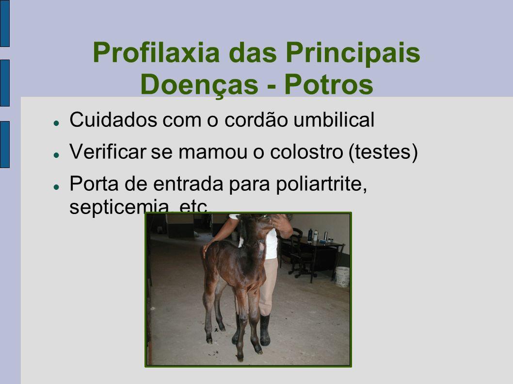 Profilaxia das Principais Doenças - Potros Cuidados com o cordão umbilical Verificar se mamou o colostro (testes) Porta de entrada para poliartrite, s