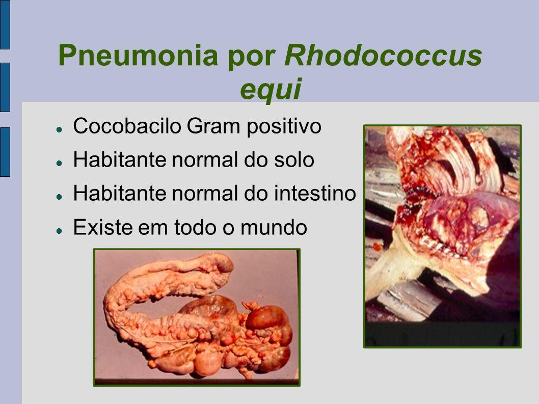 Pneumonia por Rhodococcus equi Evitar superlotação Uso de cocheira Manuseio excessivo Condições do ambiente- áreas com poeira (porteira!) Tratamento com ATB é longo e resultados duvidosos