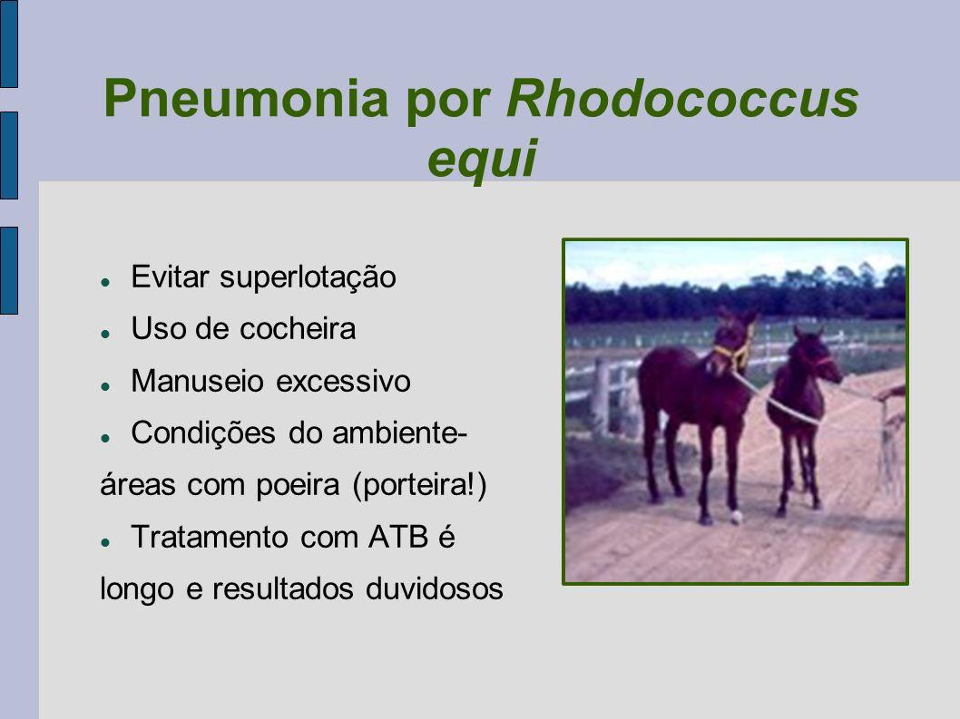 Pneumonia por Rhodococcus equi Evitar superlotação Uso de cocheira Manuseio excessivo Condições do ambiente- áreas com poeira (porteira!) Tratamento c