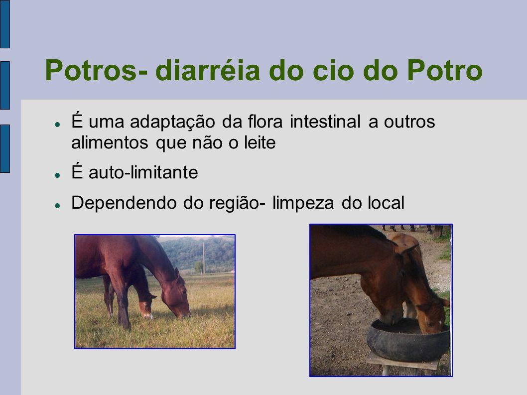 Potros- diarréia do cio do Potro É uma adaptação da flora intestinal a outros alimentos que não o leite É auto-limitante Dependendo do região- limpeza