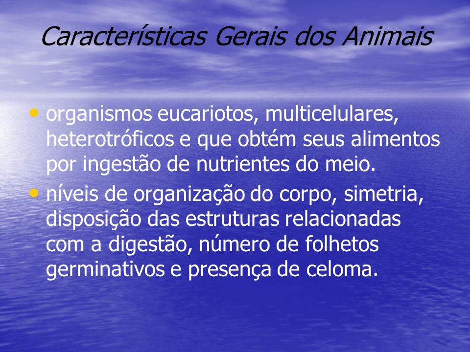 Características Gerais dos Animais organismos eucariotos, multicelulares, heterotróficos e que obtém seus alimentos por ingestão de nutrientes do meio.