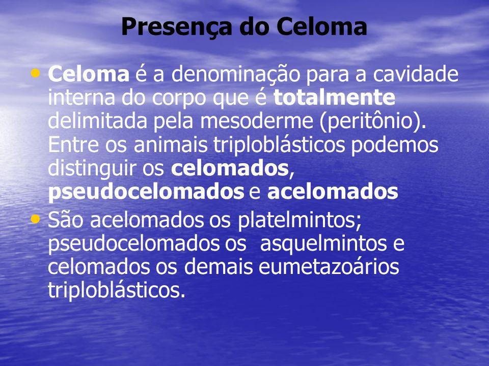 Presença do Celoma Celoma é a denominação para a cavidade interna do corpo que é totalmente delimitada pela mesoderme (peritônio).