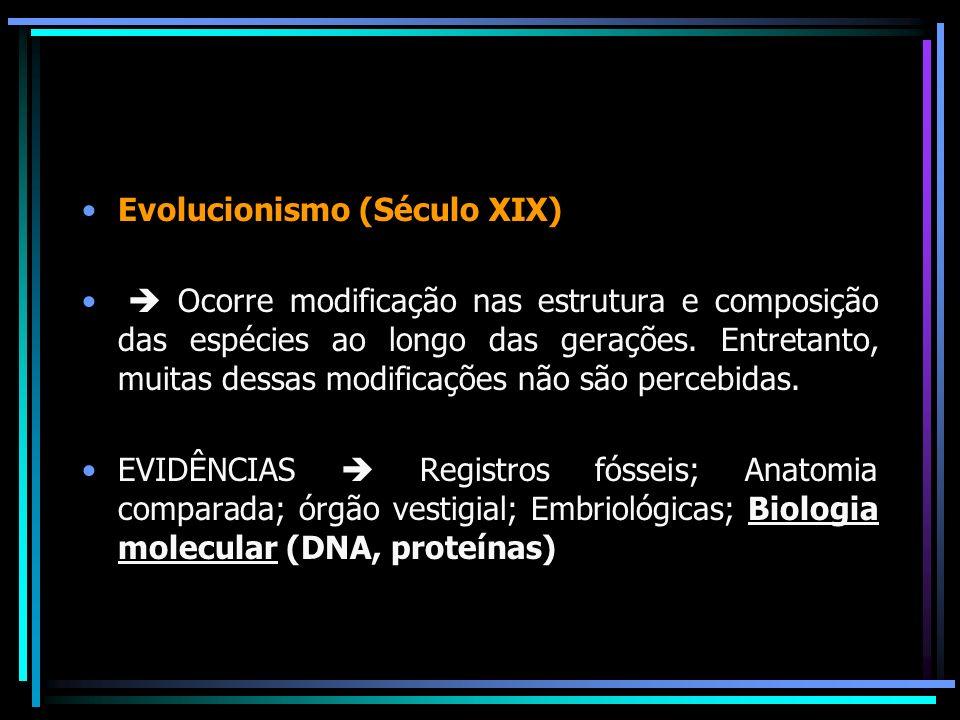Evolucionismo (Século XIX) Ocorre modificação nas estrutura e composição das espécies ao longo das gerações. Entretanto, muitas dessas modificações nã