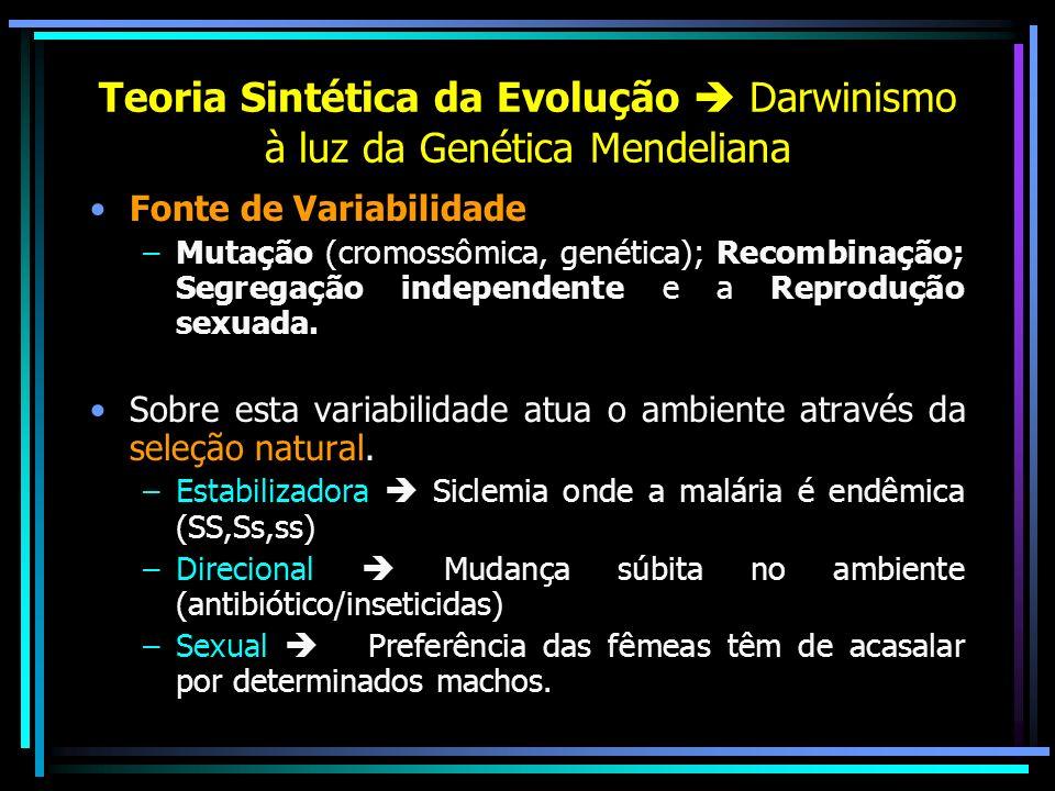 Teoria Sintética da Evolução Darwinismo à luz da Genética Mendeliana Fonte de Variabilidade –Mutação (cromossômica, genética); Recombinação; Segregaçã