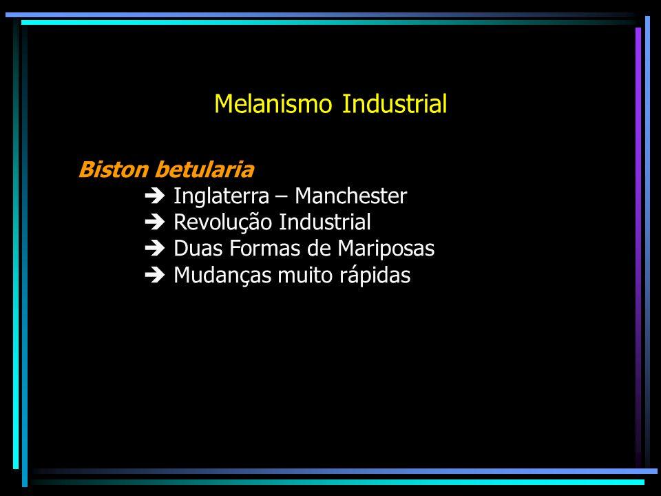 Melanismo Industrial Biston betularia Inglaterra – Manchester Revolução Industrial Duas Formas de Mariposas Mudanças muito rápidas