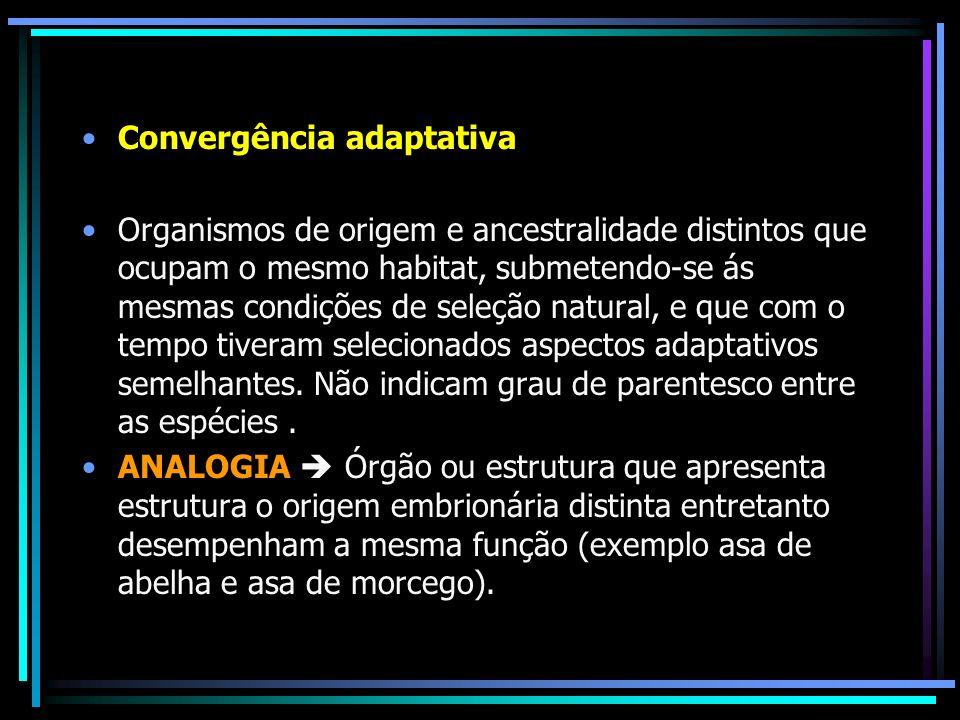 Convergência adaptativa Organismos de origem e ancestralidade distintos que ocupam o mesmo habitat, submetendo-se ás mesmas condições de seleção natur