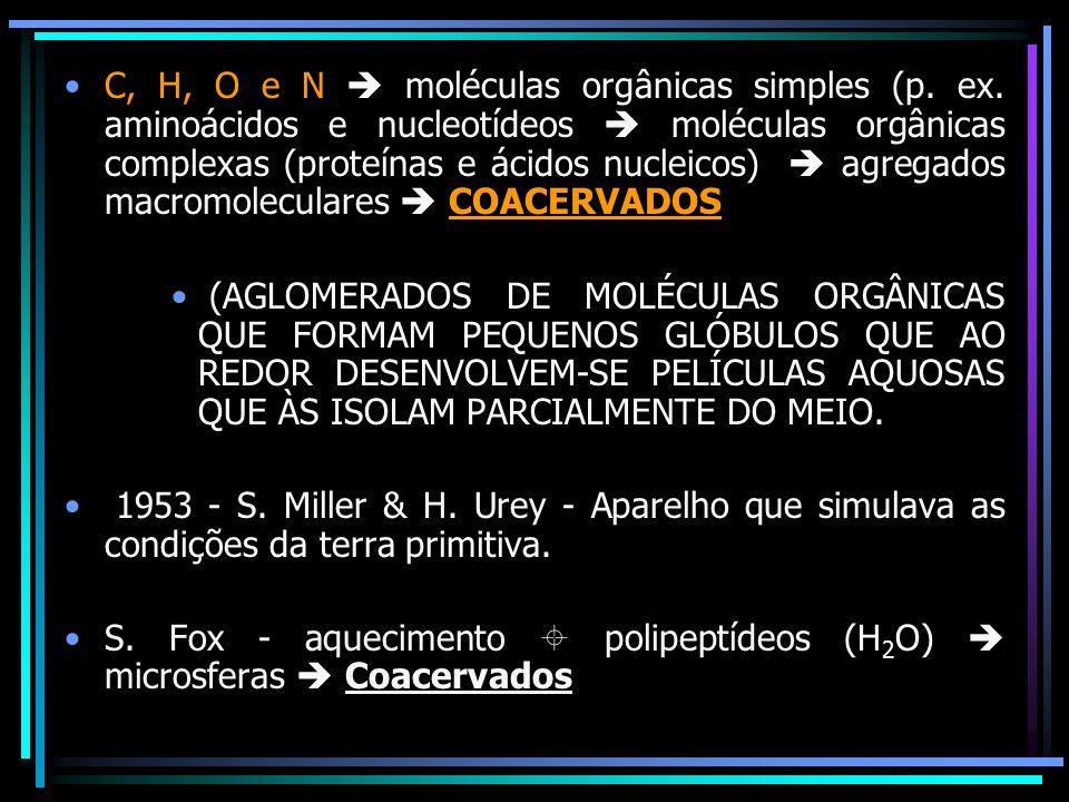 C, H, O e N moléculas orgânicas simples (p. ex. aminoácidos e nucleotídeos moléculas orgânicas complexas (proteínas e ácidos nucleicos) agregados macr