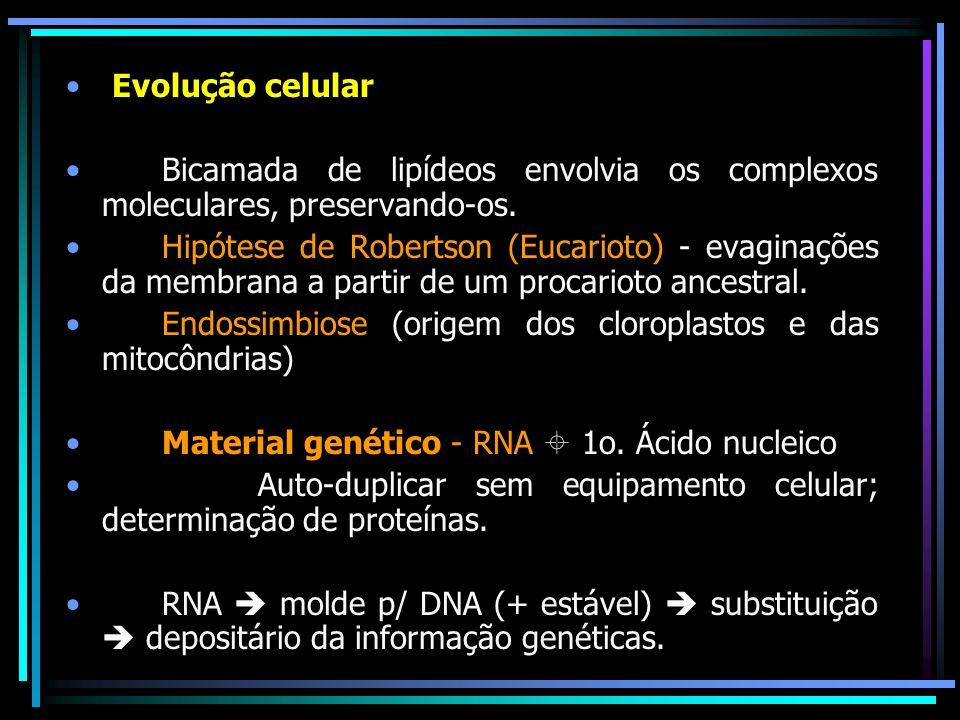 Evolução celular Bicamada de lipídeos envolvia os complexos moleculares, preservando-os. Hipótese de Robertson (Eucarioto) - evaginações da membrana a