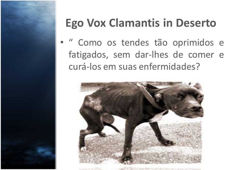 Ego Vox Clamantis in Deserto Como os tendes tão oprimidos e fatigados, sem dar-lhes de comer e curá-los em suas enfermidades?