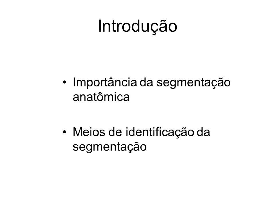 Introdução Importância da segmentação anatômica Meios de identificação da segmentação