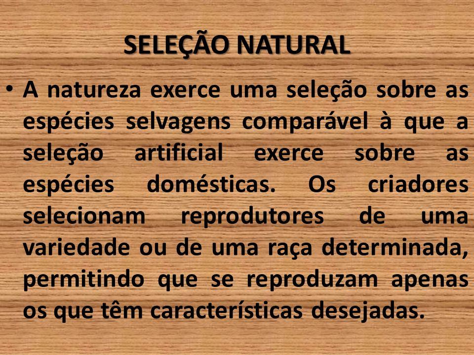 SELEÇÃO NATURAL A natureza exerce uma seleção sobre as espécies selvagens comparável à que a seleção artificial exerce sobre as espécies domésticas. O