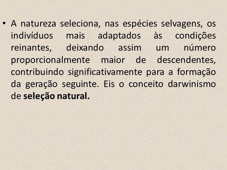 A natureza seleciona, nas espécies selvagens, os indivíduos mais adaptados às condições reinantes, deixando assim um número proporcionalmente maior de