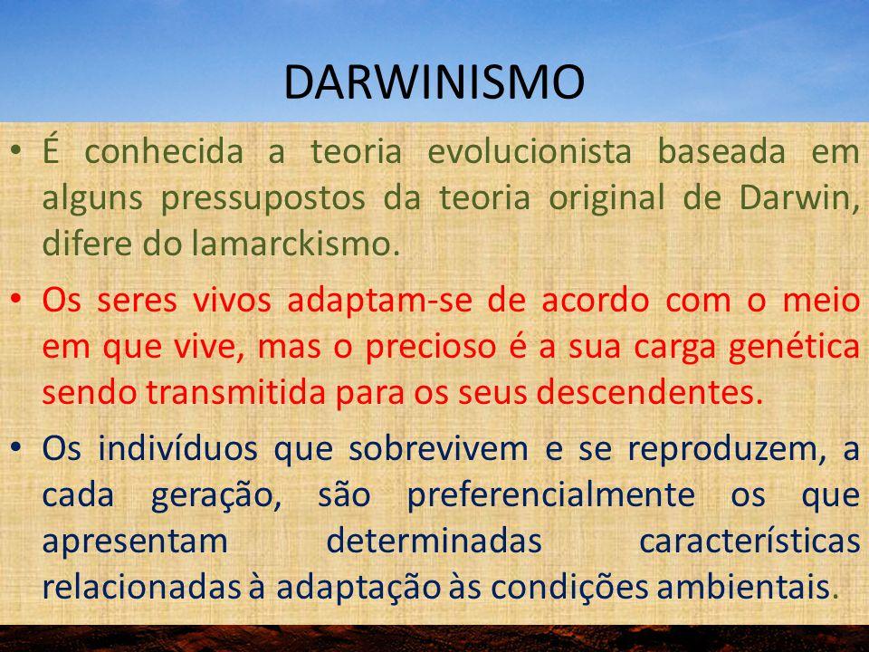 DARWINISMO É conhecida a teoria evolucionista baseada em alguns pressupostos da teoria original de Darwin, difere do lamarckismo. Os seres vivos adapt