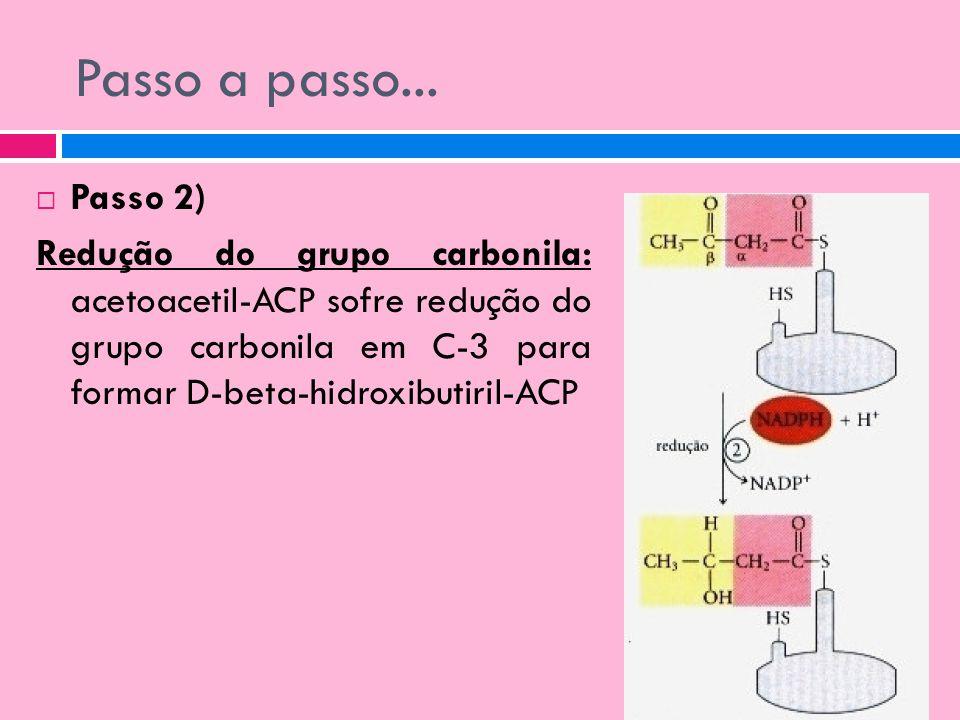 Passo a passo... Passo 2) Redução do grupo carbonila: acetoacetil-ACP sofre redução do grupo carbonila em C-3 para formar D-beta-hidroxibutiril-ACP