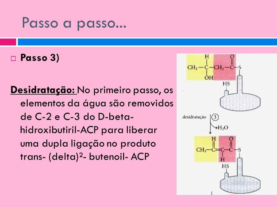 Passo a passo... Passo 3) Desidratação: No primeiro passo, os elementos da água são removidos de C-2 e C-3 do D-beta- hidroxibutiril-ACP para liberar