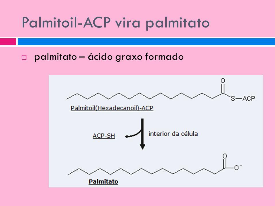 Palmitoil-ACP vira palmitato palmitato – ácido graxo formado